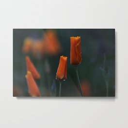 California Poppies at Dusk Metal Print