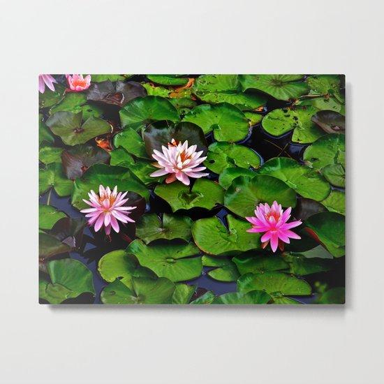 The Lilypad Pond Metal Print