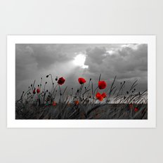 Only poppies... Art Print