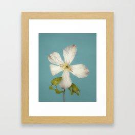 Fall Clematis Framed Art Print