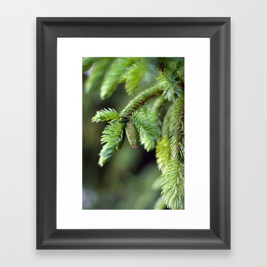 Baby Pine Cone Framed Art Print