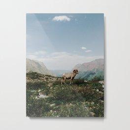 Bighorn Overlook Metal Print
