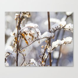 Frozen garden Canvas Print