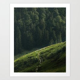 Sheep Trail in a Forest during a calm morning Art Print