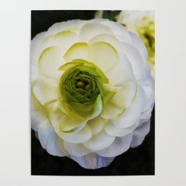 white and green flower Poster