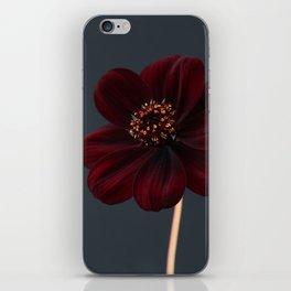 Chocolate Cosmos Flower iPhone Skin