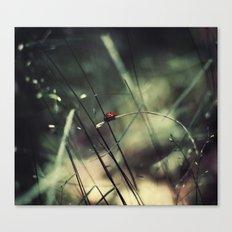 Biedronka....Ladybug Canvas Print