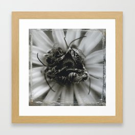 Four Bees Framed Art Print