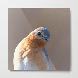 Watercolor Bird, Eastern Bluebird 03, Middletown, Maryland Metal Print