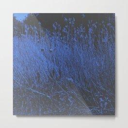 Blue Jay Whey Metal Print