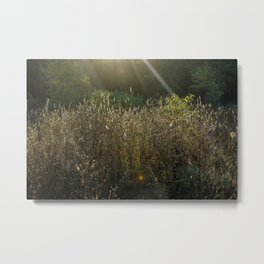 Morning Field Light Metal Print