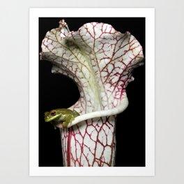 Sarracenia Home Art Print
