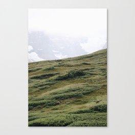 Wilcox Pass Canvas Print
