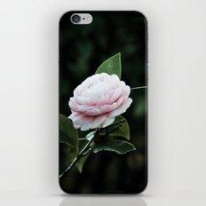 Camellias iPhone & iPod Skin