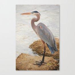 Great Blue Heron Canvas Print