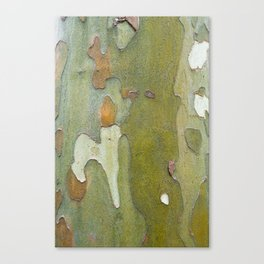 Sneaky Sycamore Canvas Print