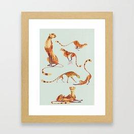 Cheetah poses Framed Art Print