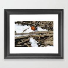 Robin Framed Art Print