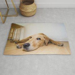 Labrador Retriever lying on the floor Rug
