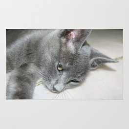 Close Up Of A Grey Kitten Rug
