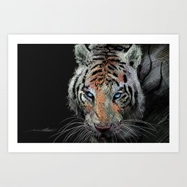 Tiger stalk Art Print