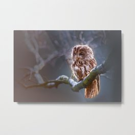 Owl On A Winter Branch Metal Print