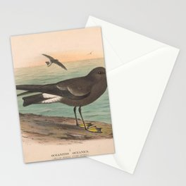 001 Yellow webbed Storm Petrel oceanites oceanica4 Stationery Cards