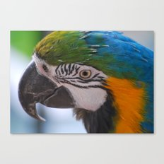 Beautiful Parrot Head Canvas Print
