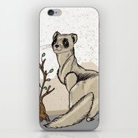 ferret iPhone & iPod Skins featuring Ferret by Madmi