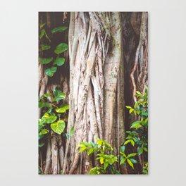 The Trees Held Secrets Canvas Print