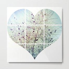 Cotinus/Smoke tree Metal Print