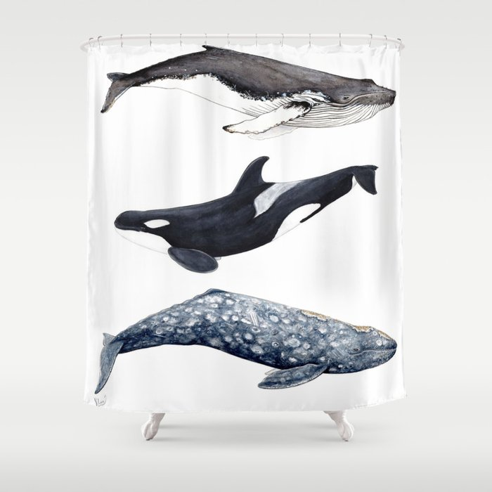 Orca Humpback And Grey Whales Shower Curtain