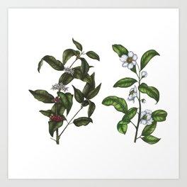 Caffeine Botanicals Art Print