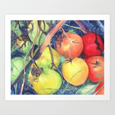 Frost Tomatoes Art Print