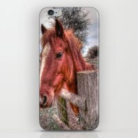 pony iPhone & iPod Skins featuring Pony  by Darren Wilkes Fine Art Images