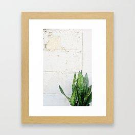snake plant Framed Art Print
