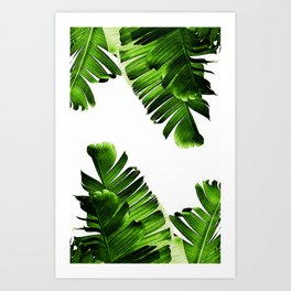 Green banana leaf Kunstdrucke