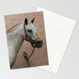 White hors Stationery Cards