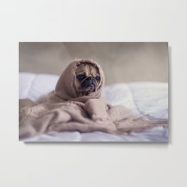 Snug pug in a rug Metal Print