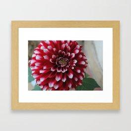Pink and White Flower Framed Art Print