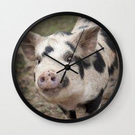 Kune Kune Piggy Wall Clock