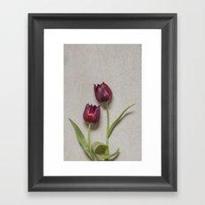 Two Red Tulips I Framed Art Print