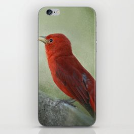 Song of the Summer Tanager 3 - Birds iPhone Skin