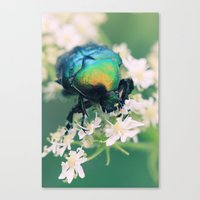 bug Canvas Prints featuring Bug by Falko Follert Art-FF77