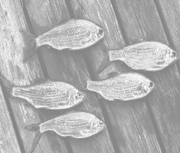 Five Fish At The Pier #decor #society6 Metal Travel Mug