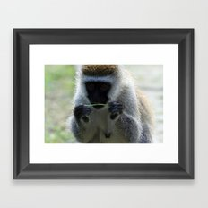 Vervet Monkey Framed Art Print