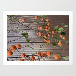 kumquat tree Art Print