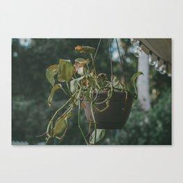 Vining Plant Canvas Print