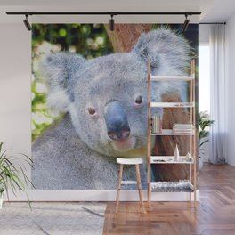 Extraordinary Animals- Koala Wall Mural