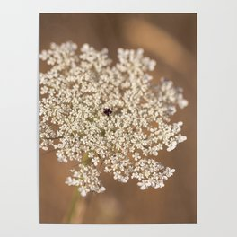 Summer Snowflake Poster